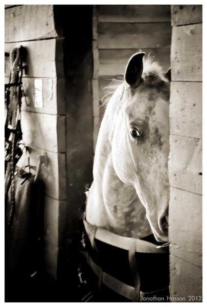 Featherdown Horses 5783